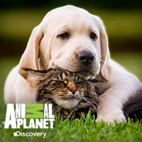 Animal Planet - Entre Perros y Gatos